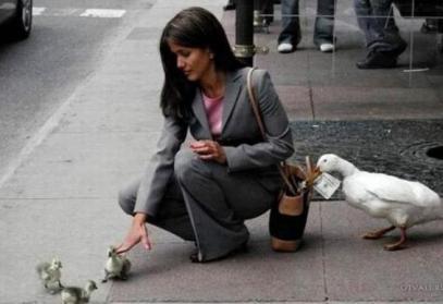 Não seja um pato, tome cuidado com roubos